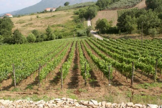 Le vigne della Tenuta Mainardi
