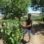 Luigi Musto Carmelitano a Pian del Moro coltivato ad alberello