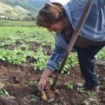 Lina e il suo campo di patate