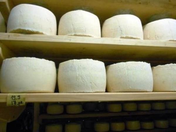 i formaggi di Dario Zidarich