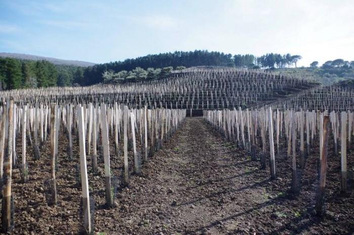 le vigne Cusumano