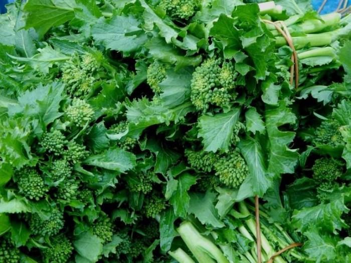 i broccoli aprilatici