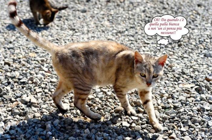 uno dei gatti di Podere Sanlorenzo