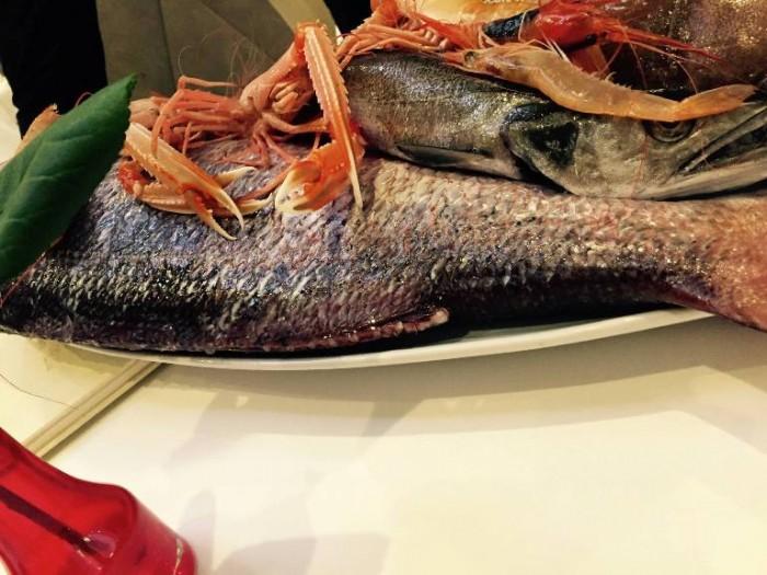 Gambero Rosso, il pescato del giorno