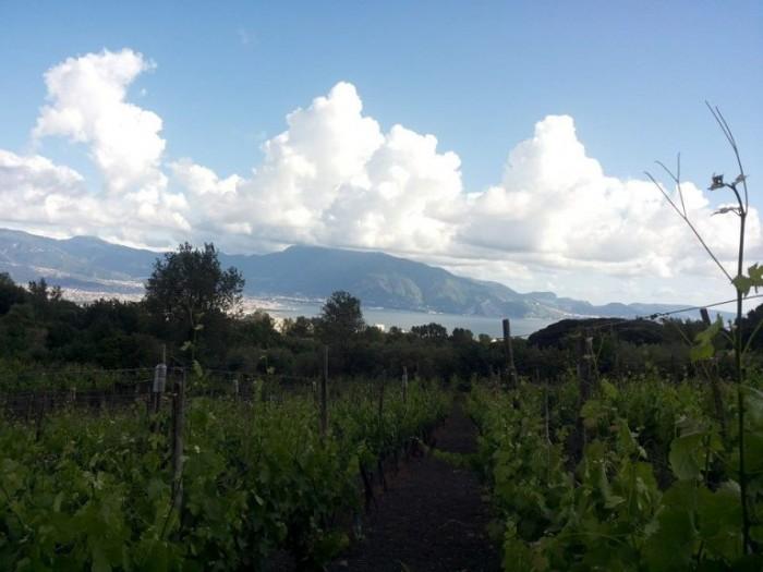 una vista dalle vigne di Casa Setaro
