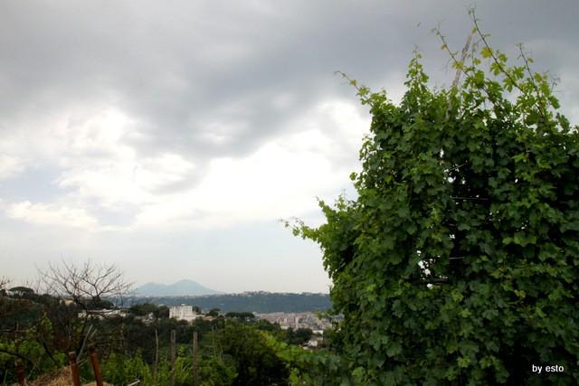 Agriturismo Il Gruccione Il panorama con il Vesuvio