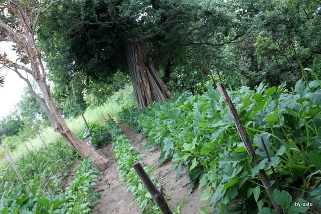 Agriturismo Il Gruccione  l'orto tra le viti