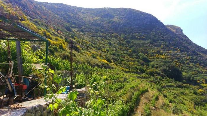 Antiche Cantine Migliaccio, vigne
