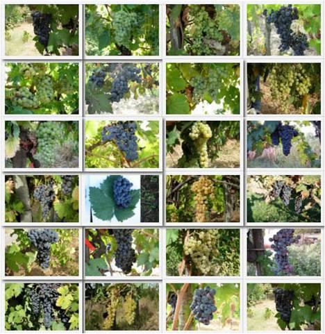 """Incontro-degustazione """"Dai vitigni del passato i vini del futuro"""""""