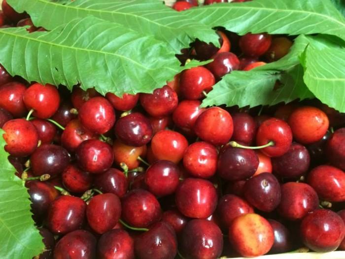 Le ciliegie bio direttamente dall'albero di Peppe Di Martino