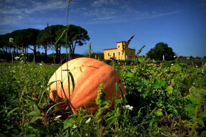 L'orto di Peppe Zullo a Villa Jamele