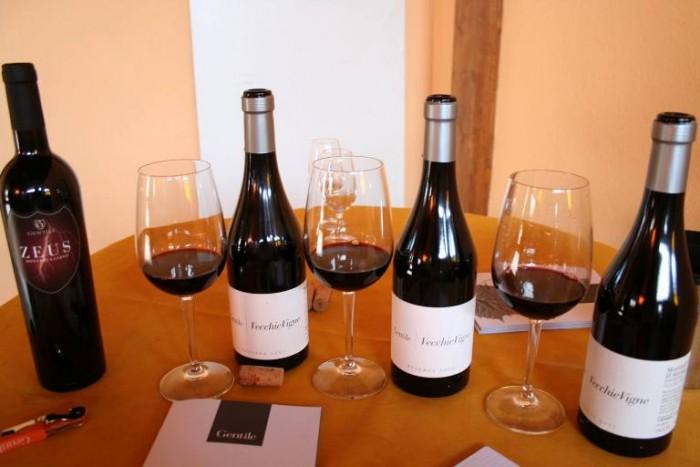 i vini di Riccardo Gentile