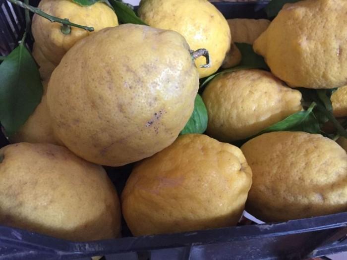 Al Giardiniello, i limoni