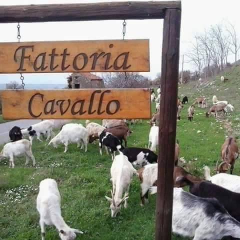 Fattoria Cavallo, l'ingresso