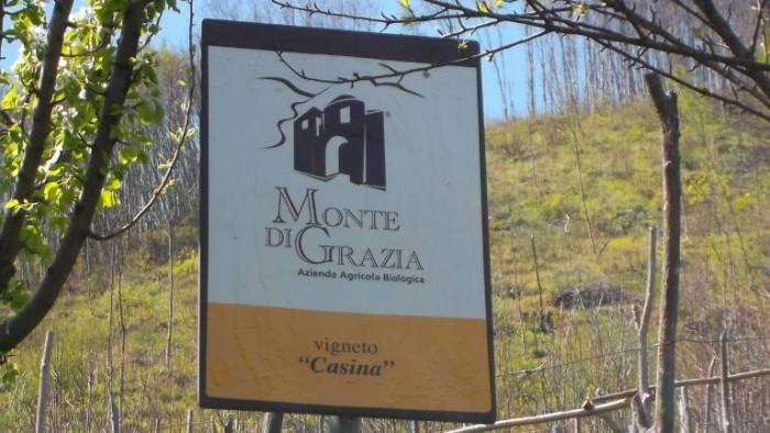 Monte di Grazia