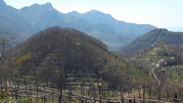 Monte di Grazia, panorama visto dall'azienda