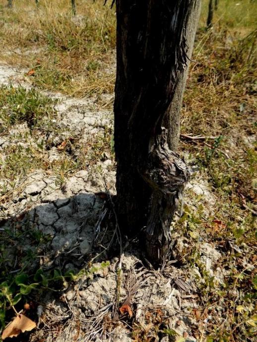 Petilia, particolare del suolo