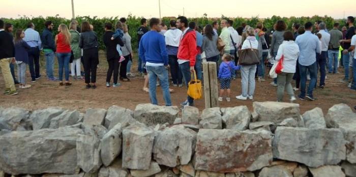 Masseria Faraona,  la raccolte delle uve