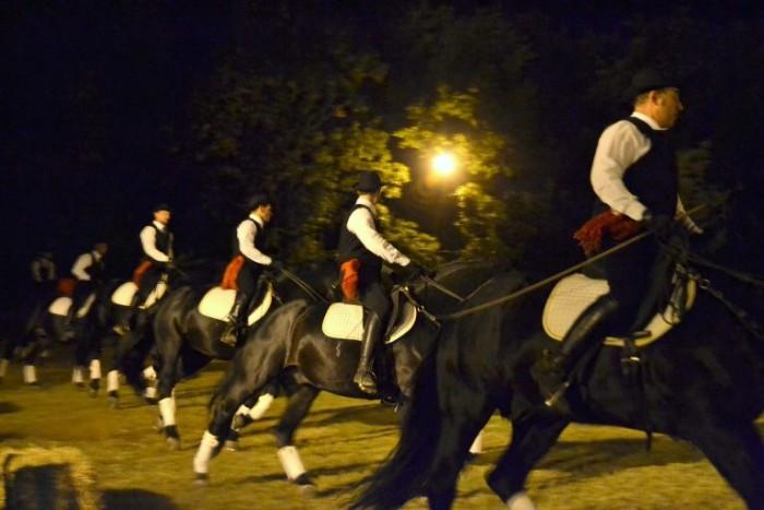 l'esibizione dei cavalli Murgesi