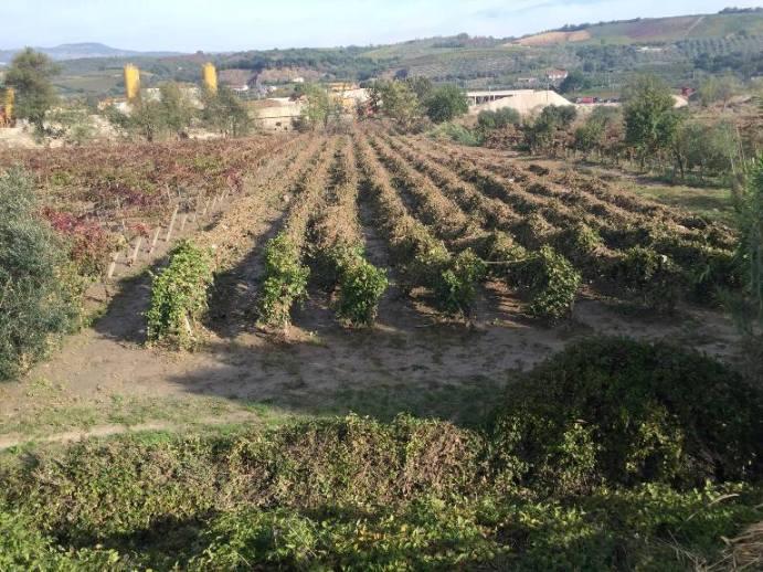 Alluvione a Benevento, le vigne distrutte dal fiume