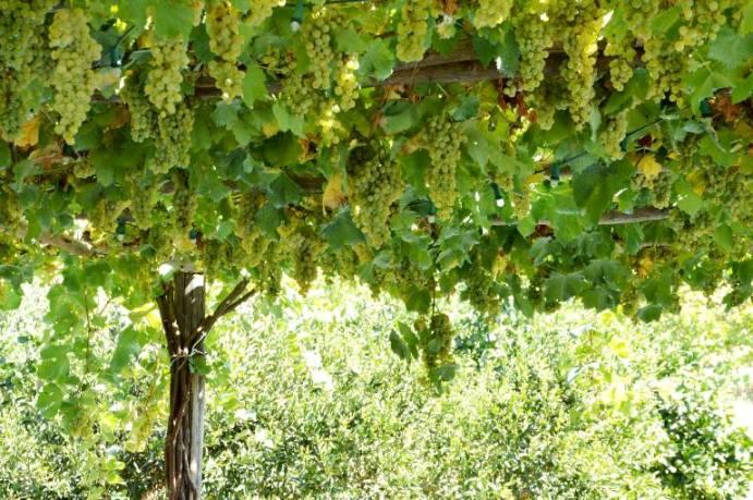 La Sibilla, sfumature di verde