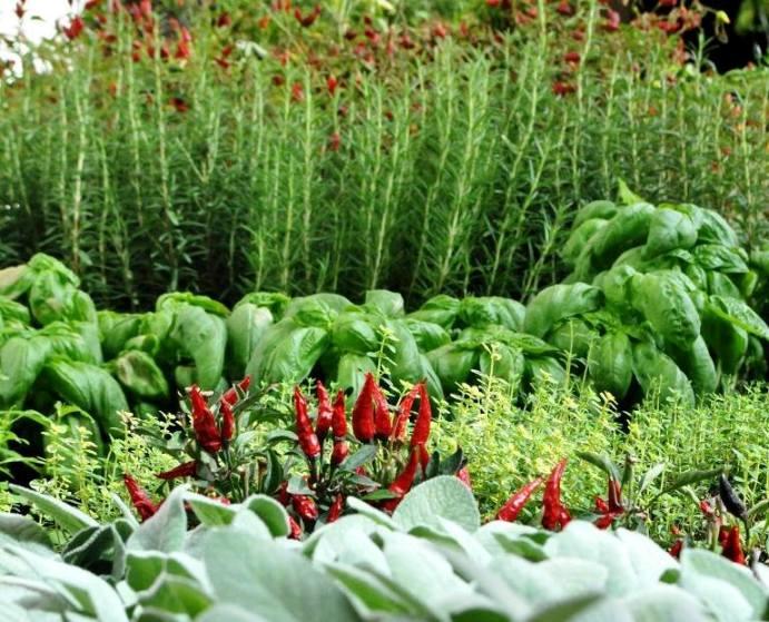 MAGNA, orto-le verdure
