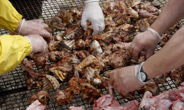 carne e cancro