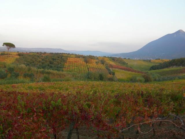 Le vigne di Castelvenere