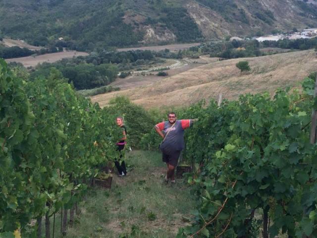 Le vigne del Fortore