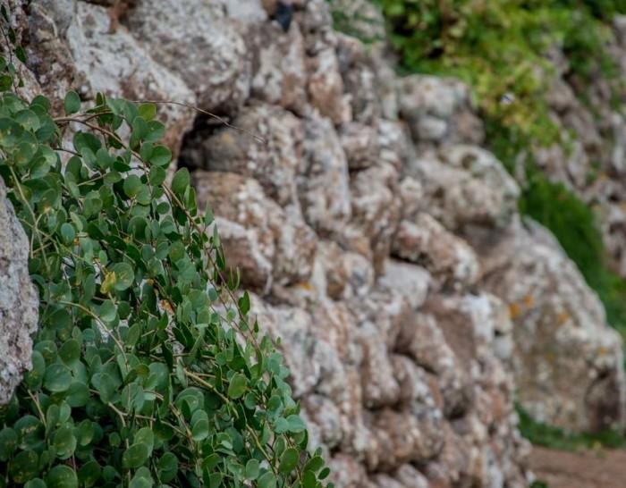 Arbusti tra spacchi di roccia