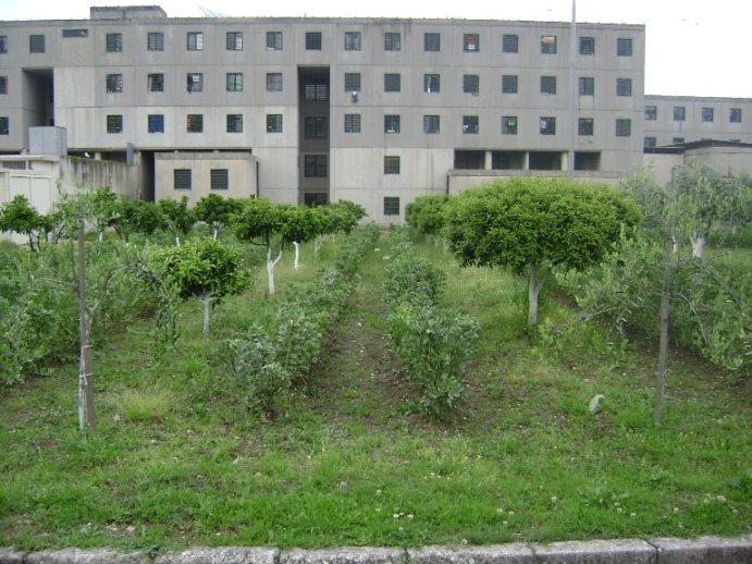 Centro-Penitenziario-di-Secondigliano-lorto