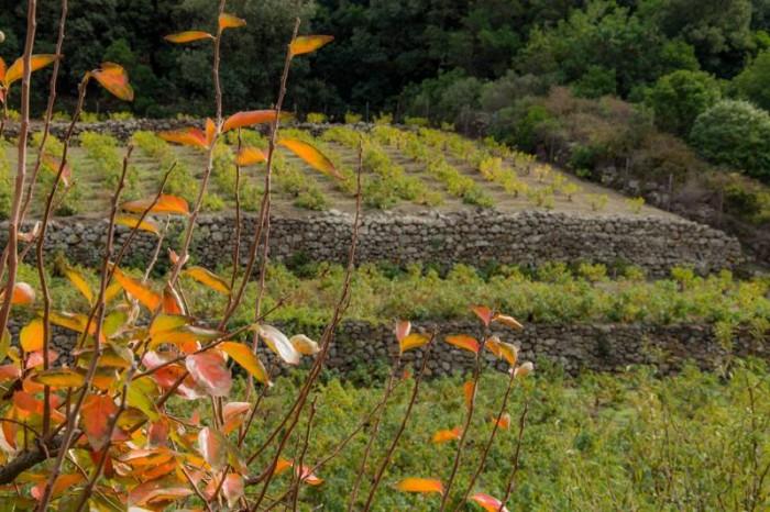 Coste Ghirlanda, colori di autunno