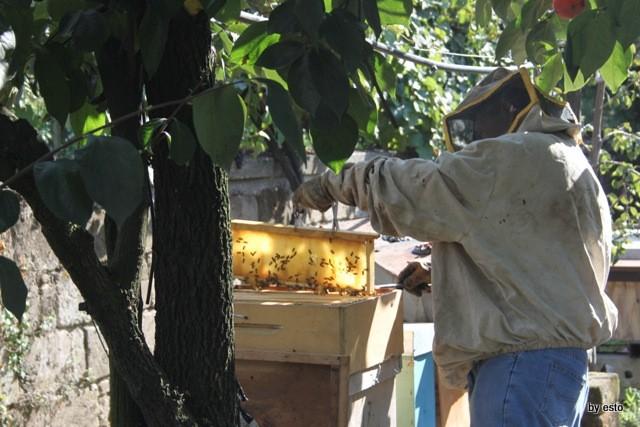 Miele. L'orto  di Aniello www.lucianopignataro.it