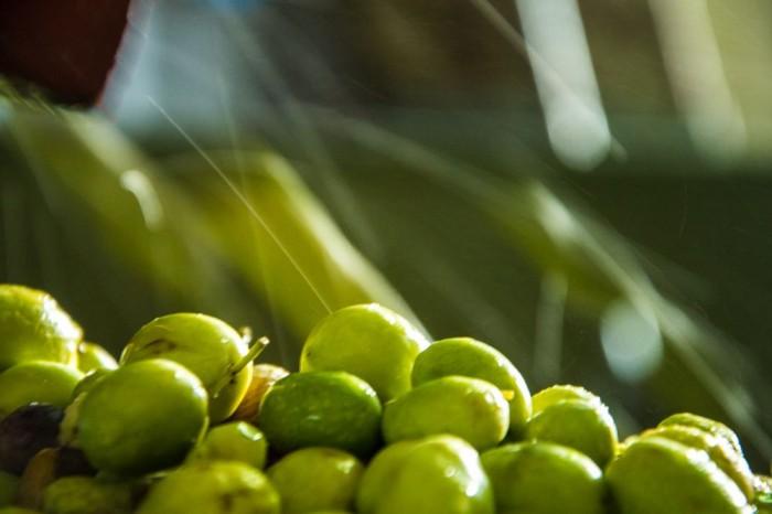 Olive in frantoio