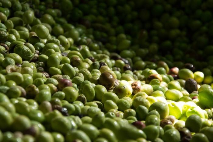 Olive lavate e pronte ad essere lavorate