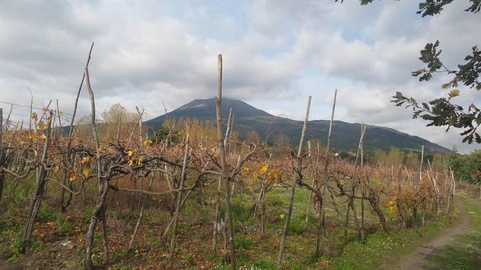 Cantine Matrone, le vigne col Vesuvio sullo sfondo