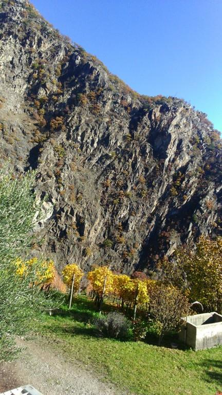 Castel Juval, vista della vigna