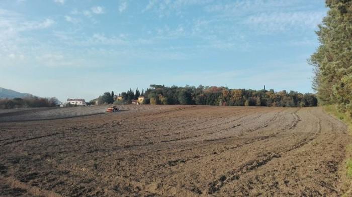 I terreni coltivati di Fattoria Della Rocca, Caiazzo