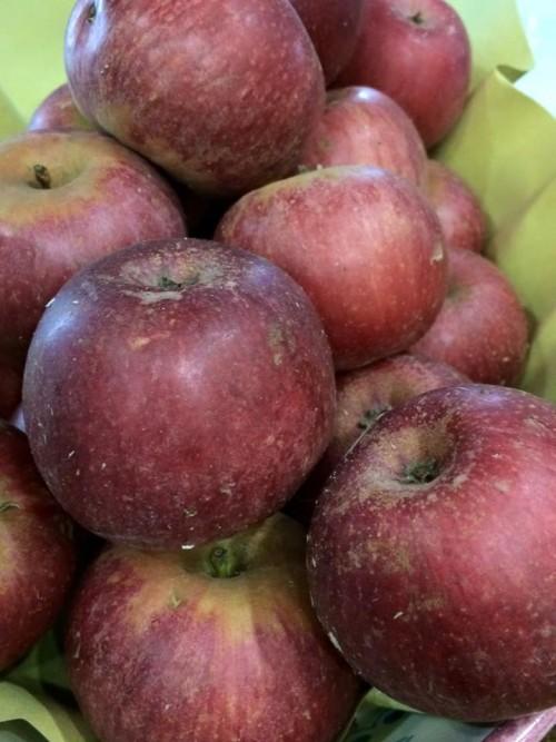 Le mele annurche di Pasquale Torrente