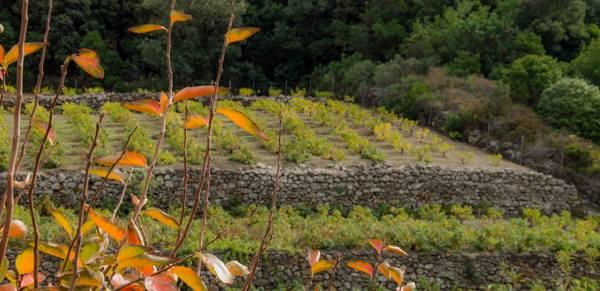 Pantelleria, i terrazzamenti
