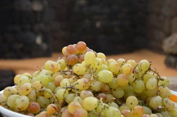 Pantelleria, le uve