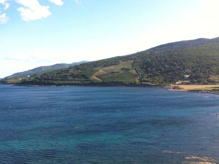 vigne sul mare del Cape Corse