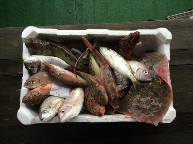 pescato per cacciucco