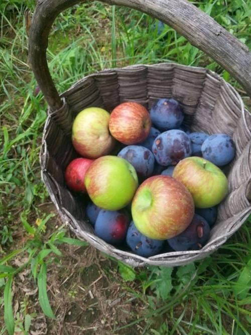 Agriturismo da Regina, la frutta dell'orto