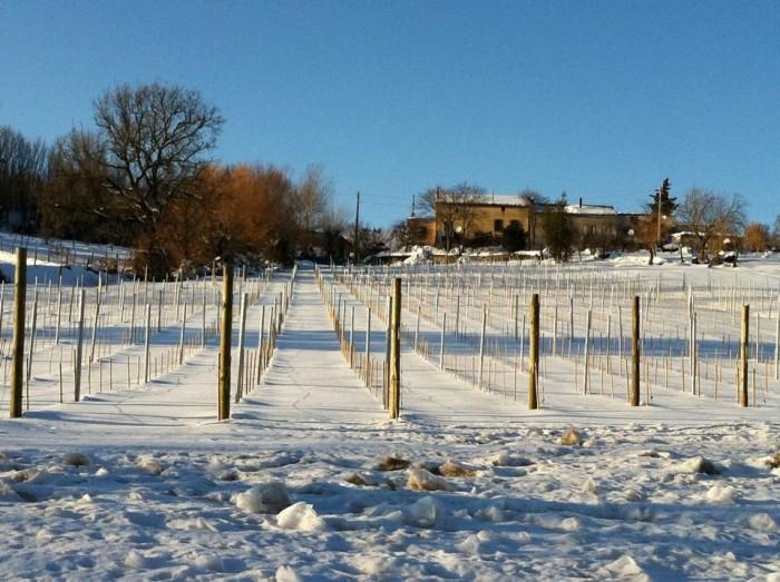 Fiano Cianciulli la vigna sotto la neve