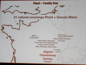 Swiss Wines,  Pinot family