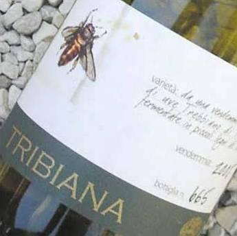 Tribiana 2012 Pieve De' Pitti