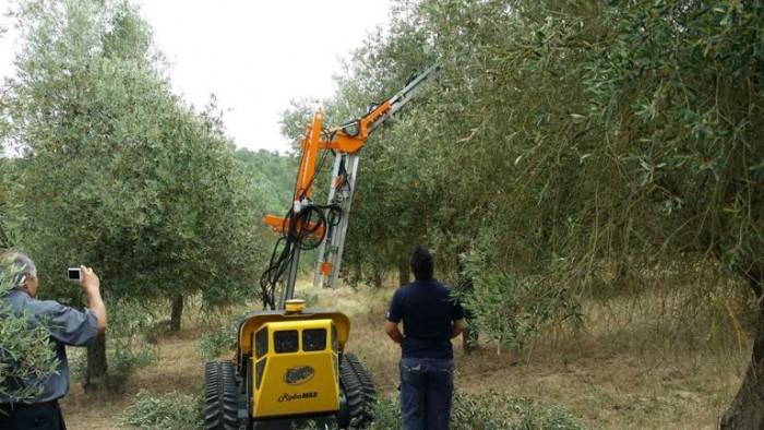 la festa dei 40 anni della cooperativa Nuovo Cilento, il trattore radiocomandato per la raccolta delle olive
