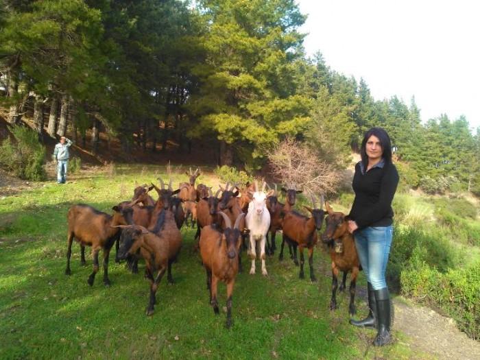 Filomena Merola con le sue caprette