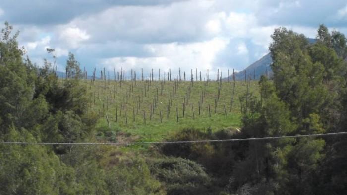 Silvaplantarium, spicchio di vigna di Santa Sofia